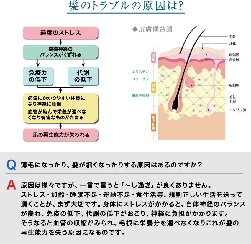 """""""髪のトラブルの原因は?"""